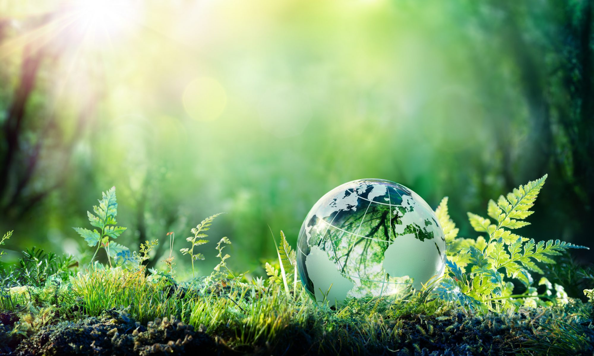 IoT and Sustainability